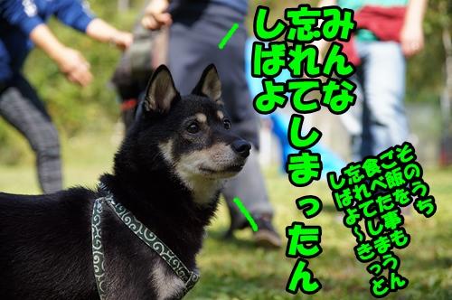 DSC04880.jpg