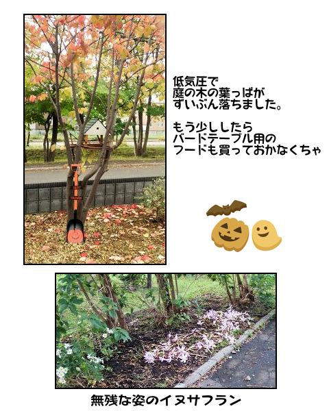 20151010niwa.jpg