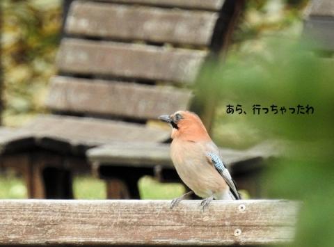 20151011kakesu2.jpg