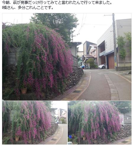 SnapCrab_NoName_2015-9-6_11-54-57_No-00.png