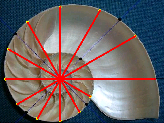 対数授業オウムガイの図