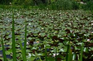ひばの里のため池