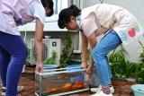 金魚 (2)