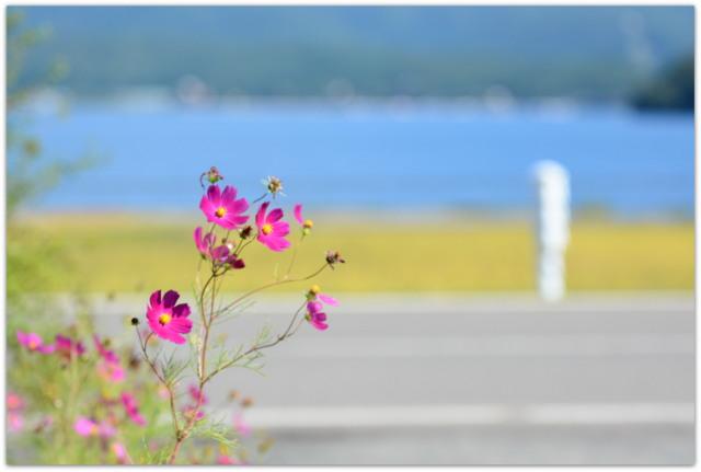 秋田県 仙北市 マラソン 大会 スポーツ イベント 記録 写真 カメラマン 出張 委託 派遣