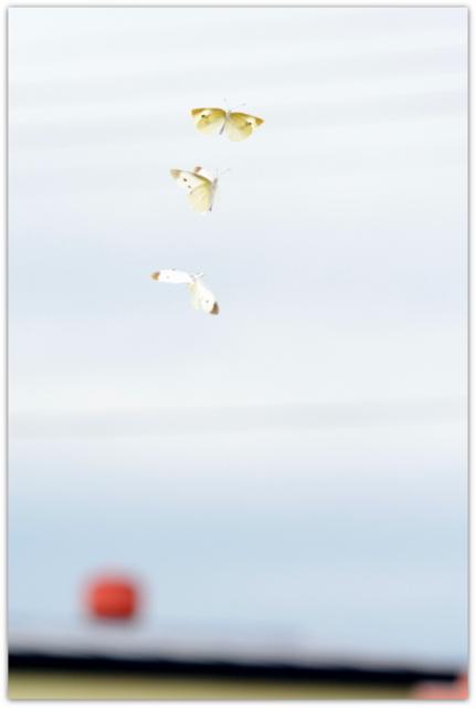 青森県 弘前市 保育所 保育園 幼稚園 スナップ 写真 出張 カメラマン 記録 撮影 インターネット販売