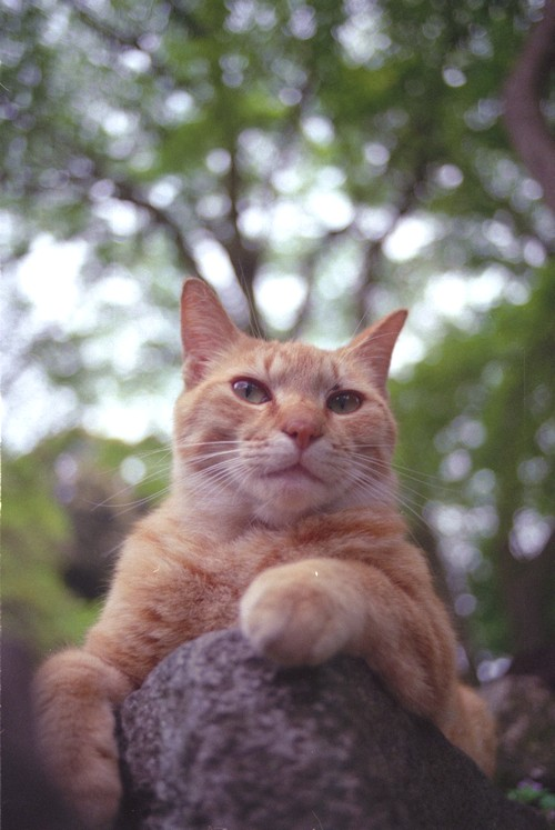猫ポートレート