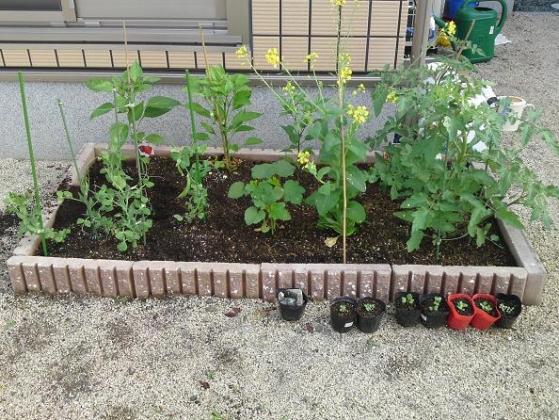 20120527001_手作り花壇の家庭菜園