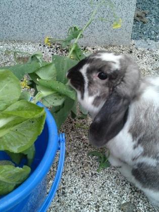 20120527006_白菜を食べるそら
