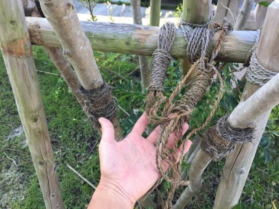 20150902002_木を固定していた縄