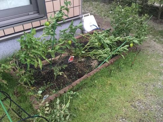 20150902004_台風で壊滅しかけた家庭菜園