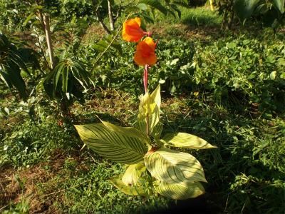 8.22畑の花2