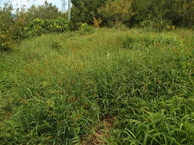 9.12草に埋もれる畑