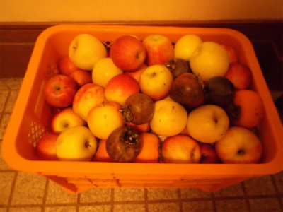 10.12持って帰ったリンゴ