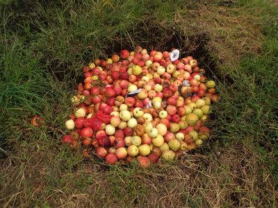10.12捨てられたリンゴ