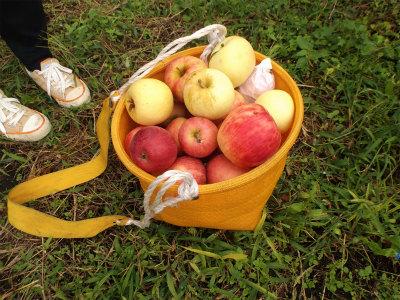 10.12痛んだリンゴ