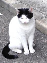 モデル猫?