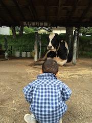 牛を凝視するキュンタロ