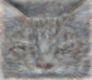 グーグルの猫
