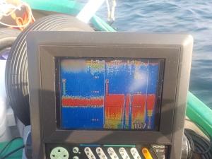DSCN0938 ウスメバル魚探図