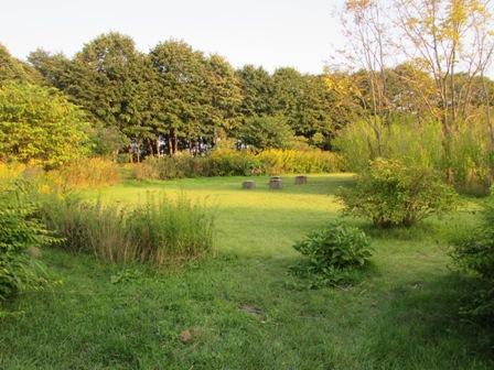 近くの森林公園
