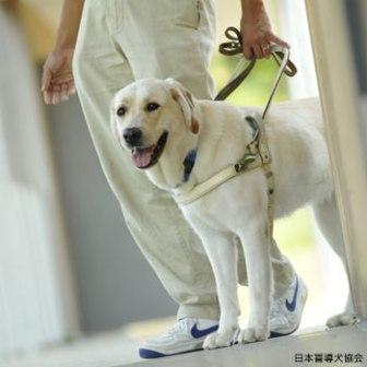 けなげな盲導犬たち