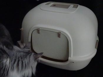 猫トイレ新 (1)