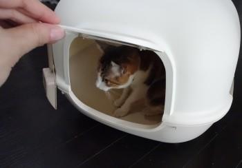 猫トイレ新 (2)