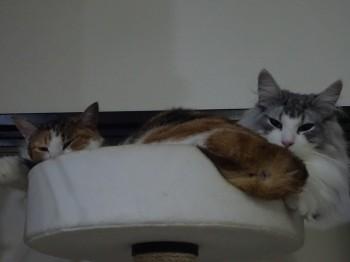 猫団子の季節 (3)