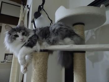 猫団子の季節 (4)