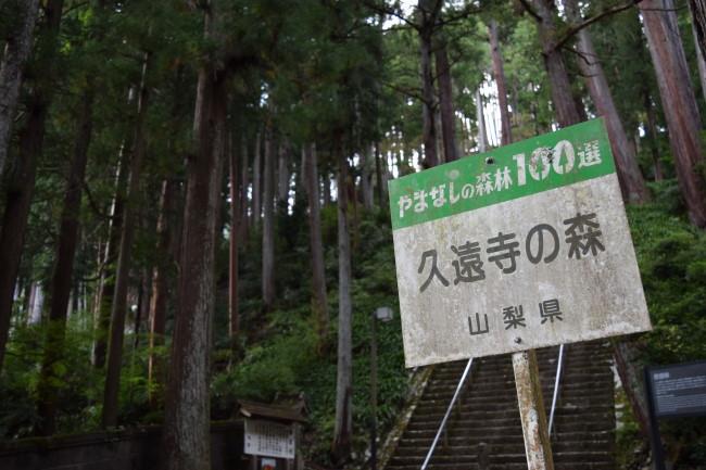 久遠寺の森