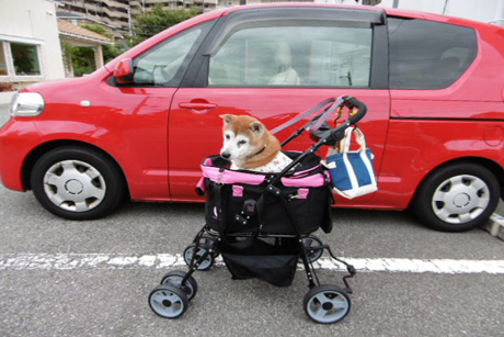 車と一緒に♡