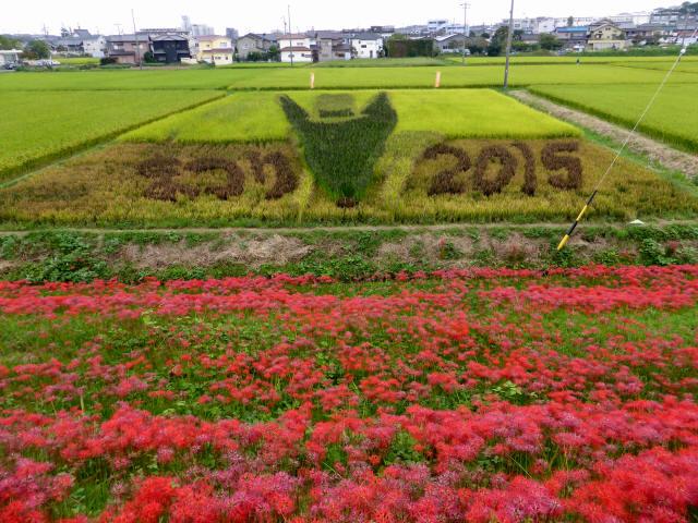 矢勝川の彼岸花7