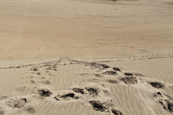 42鳥取砂丘4
