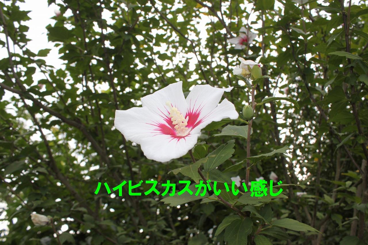 694b-IMG_2368.jpg
