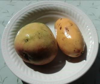 マンゴー2種