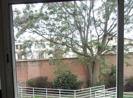フォンデラカの木