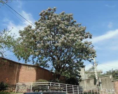 花と実のある木の花満開