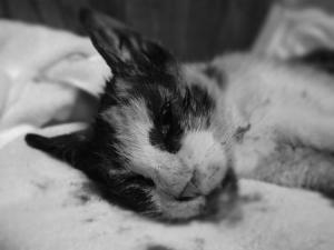 事故猫2015.8.22②