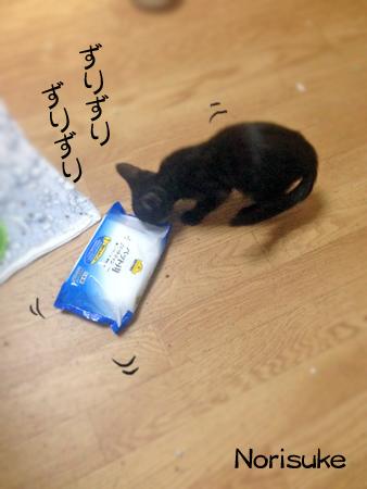 ノリスケ2015.9.13②