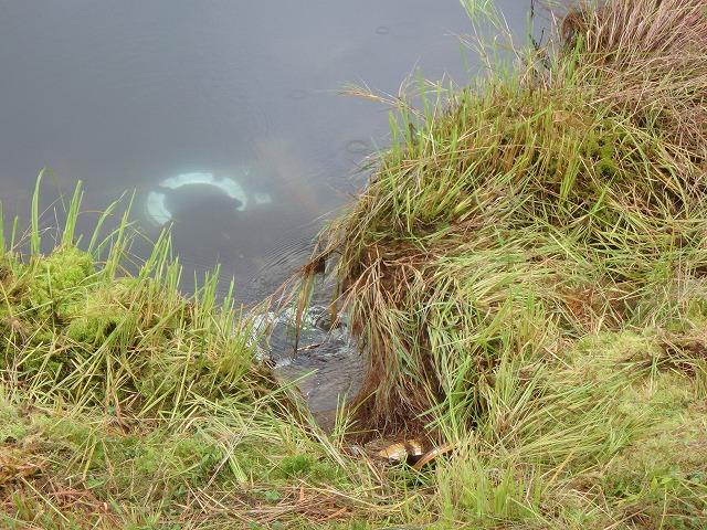 20150830御射鹿池の落水開始 (14)