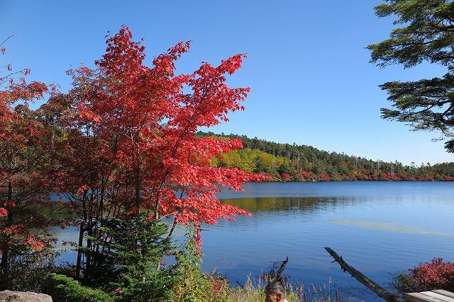 白駒池の紅葉 (1)