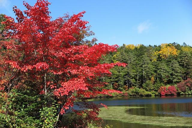 白駒池の紅葉 (2)