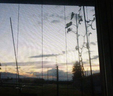 キッチン窓から・・・