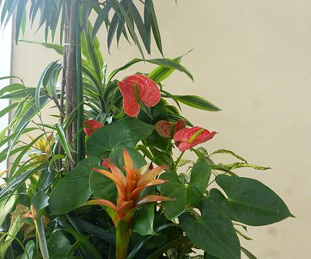 フロアの鉢植え