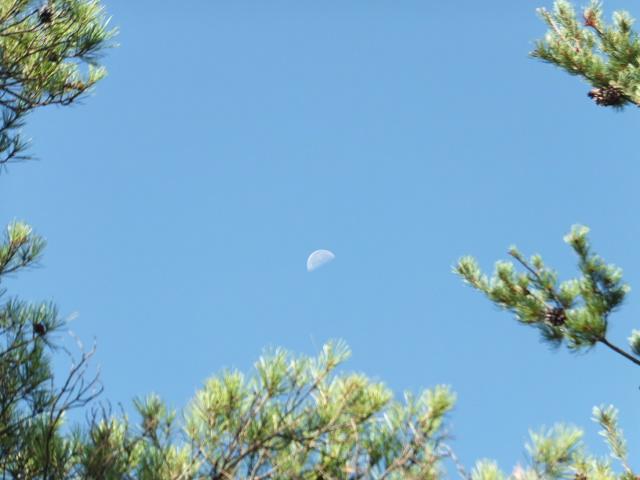 額の中の月