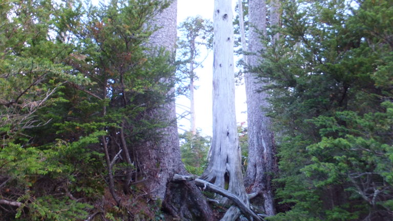 神々しい木々