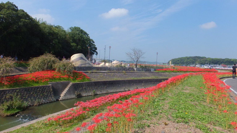 高田橋から見る矢勝川堤
