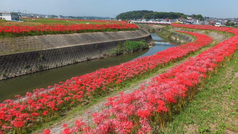 矢勝川に沿って