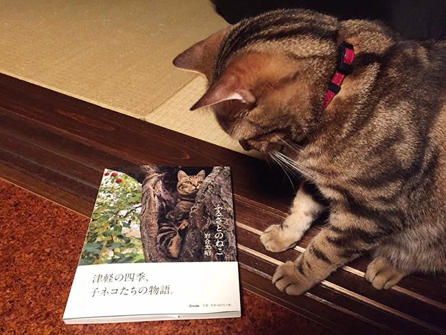 blog_000006132.jpg