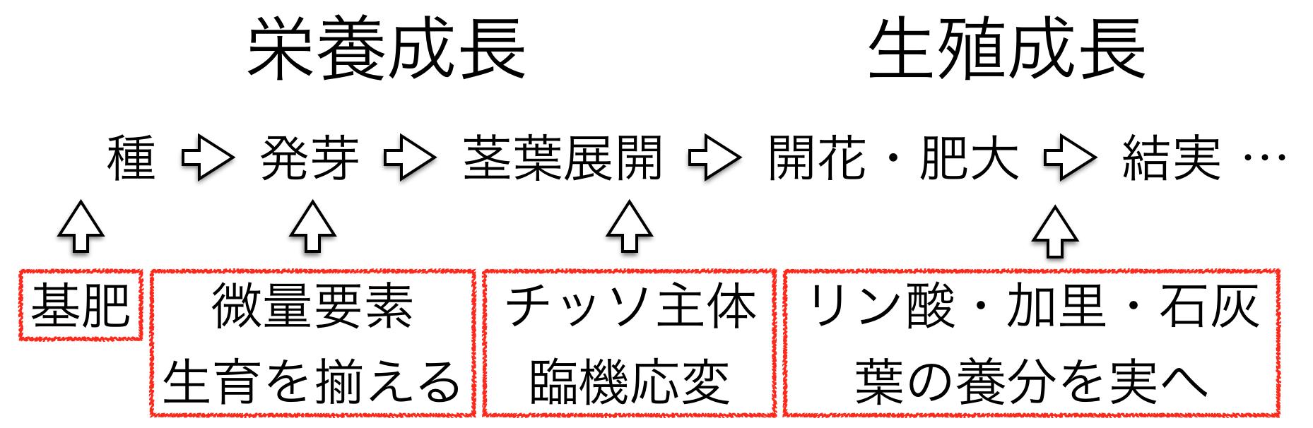 植物の基本サイクル2